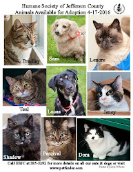 Doggies & Cats in Port Townsend