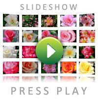 Rose Types Slideshow