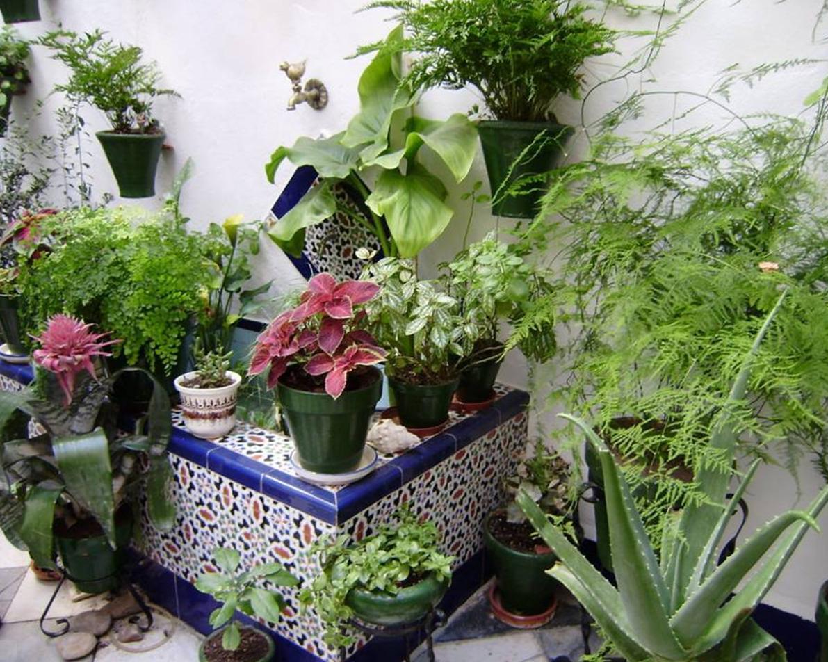 Patios de c rdoba andaluc a espa a mendozada 2009 - Tipos de jardineras ...