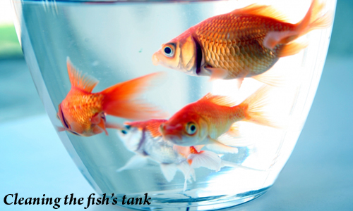 Pets Food And Care: Pets foods and care - Caring for your pet fish
