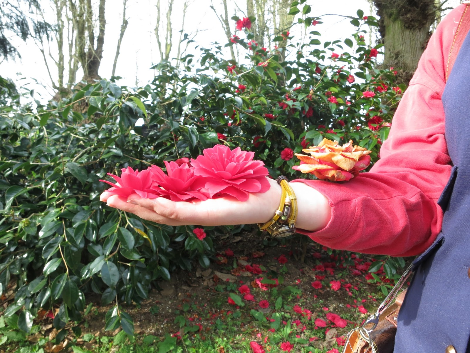 Hand outstretch holding three red camellia flowers with even more faded one on arm