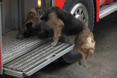 perra salva a sus cachorros