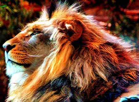 Sports Amazing Lion Pictures