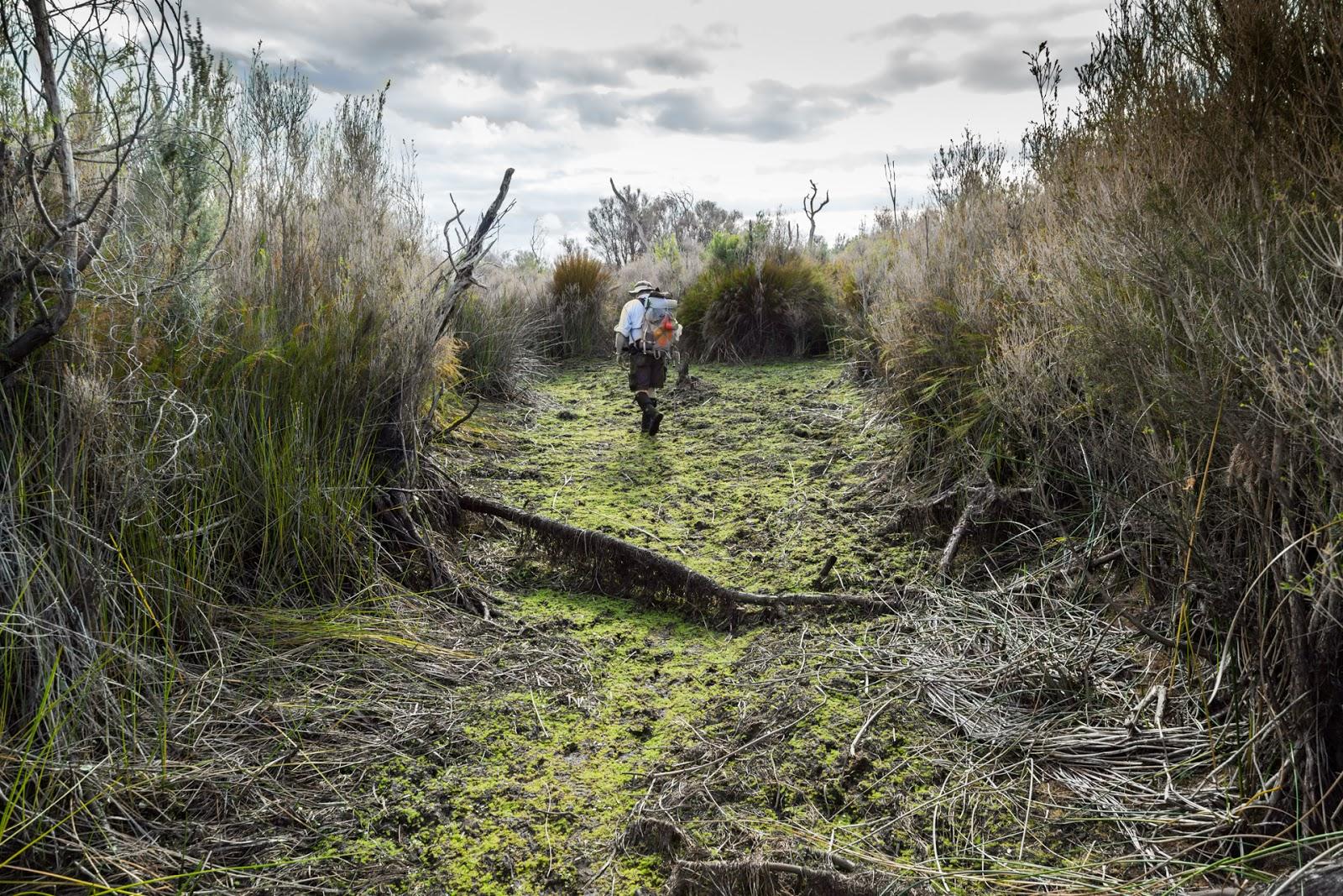 chinaman swamp wilsons promontory