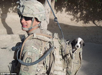Wounded Soldier Reunited with his Dog