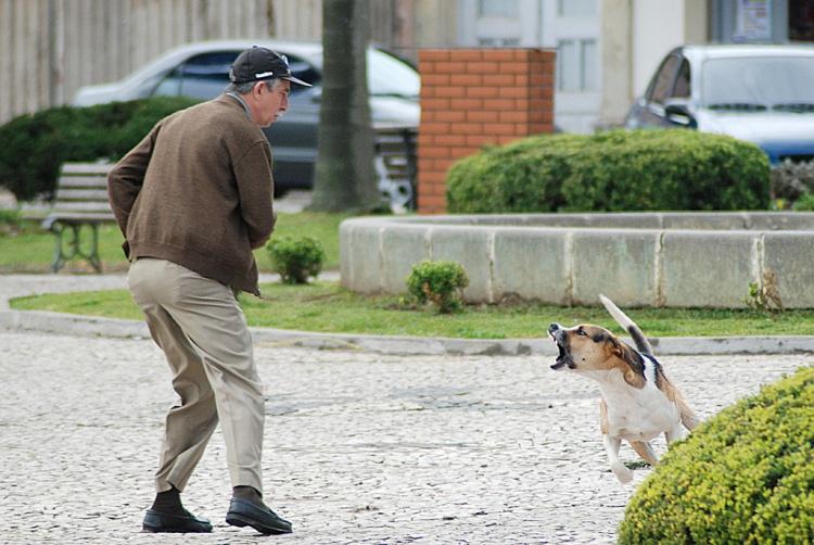 animal Por que o Comportamento Agressivo do Cão