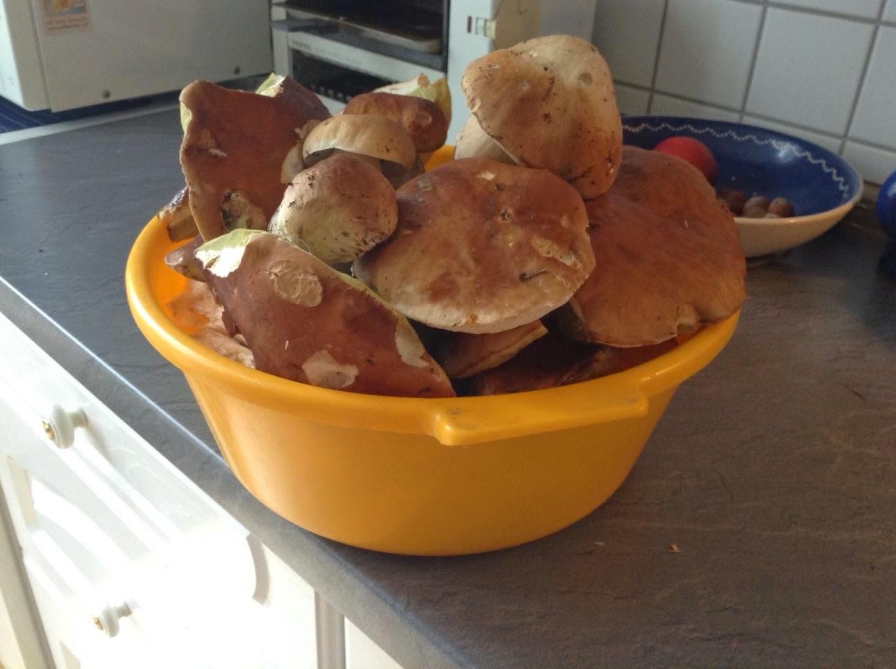 Pilzsucher freuen sich