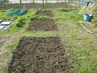 St Ives Allotment - Potato Beds