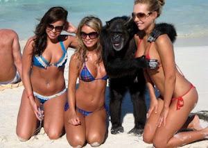 Macaco Numa