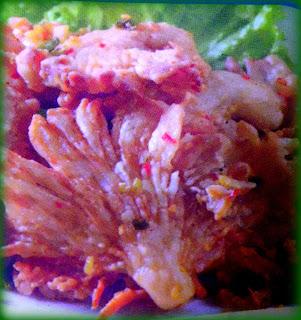 Resep Jamur Tiram Crispy Renyah