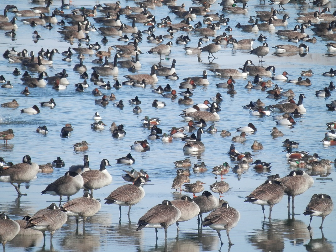 wildbirds broadcasting february 2013