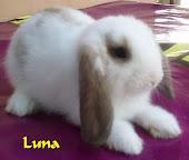 Luna (BUCK)