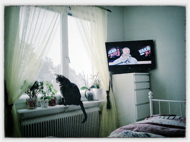 bedroom, window, vakna med nrj, tv, cat in window