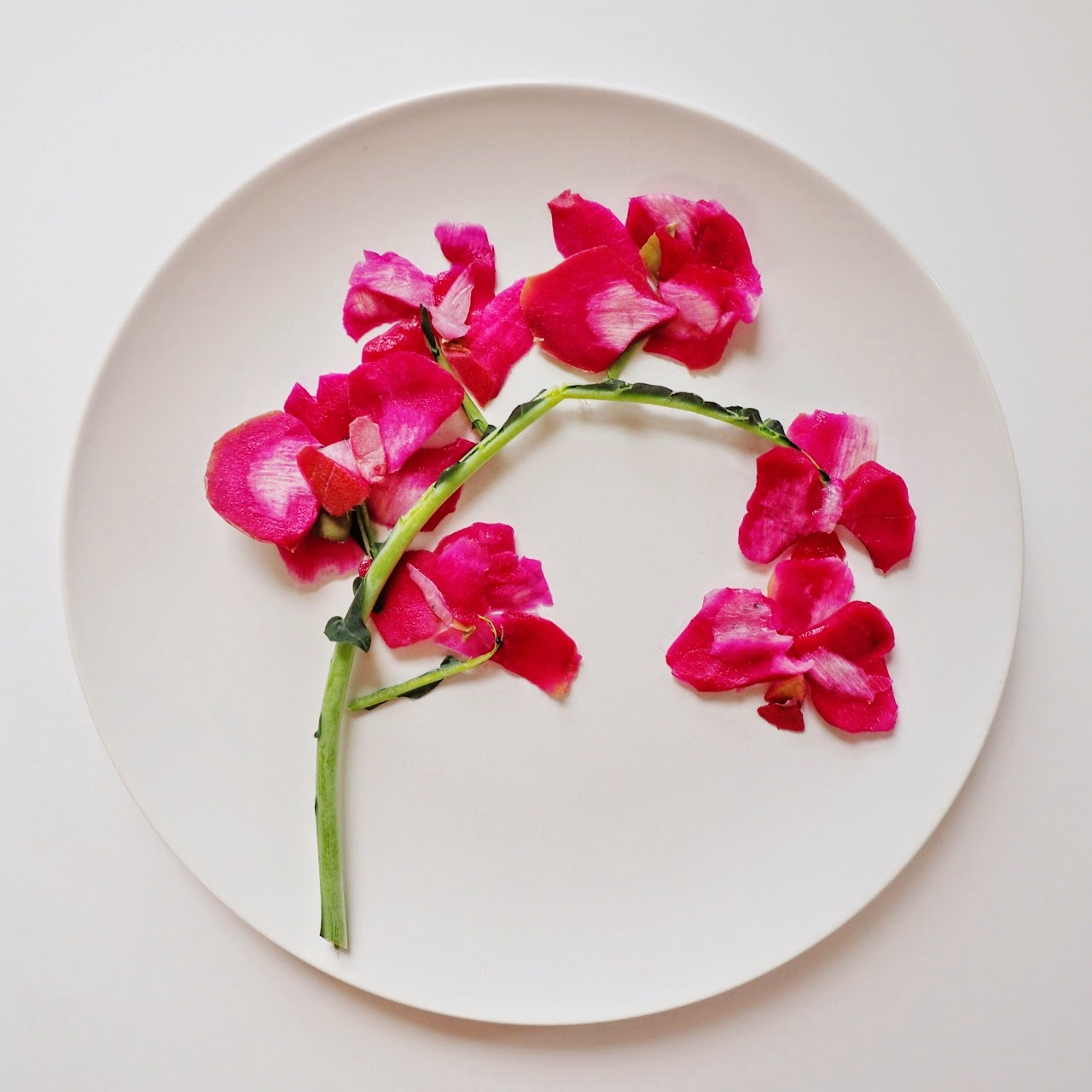 10-Pink-Orchid-Lauren-Purnell-Love-Art-and Love-for-Food-www-designstack-co