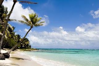 wakacje plaża palmy