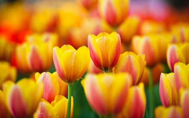 Coloridas Flores