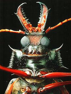 Длиннорогий жук