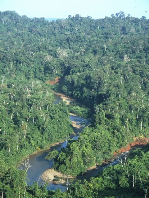 The amazonian virgin forest in Brazil - Peru