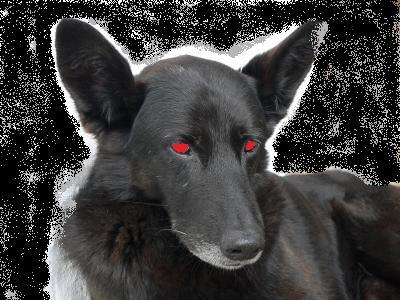 Black Dog Gravyard