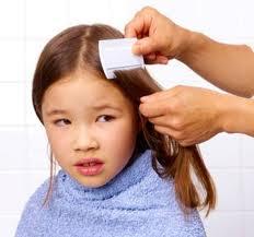 Cara Menghilangkan Kutu – Cara Membasmi Kutu Rambut