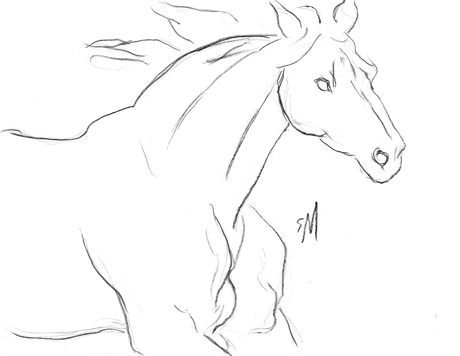 Horse Head Line Drawing Crazywidowfo