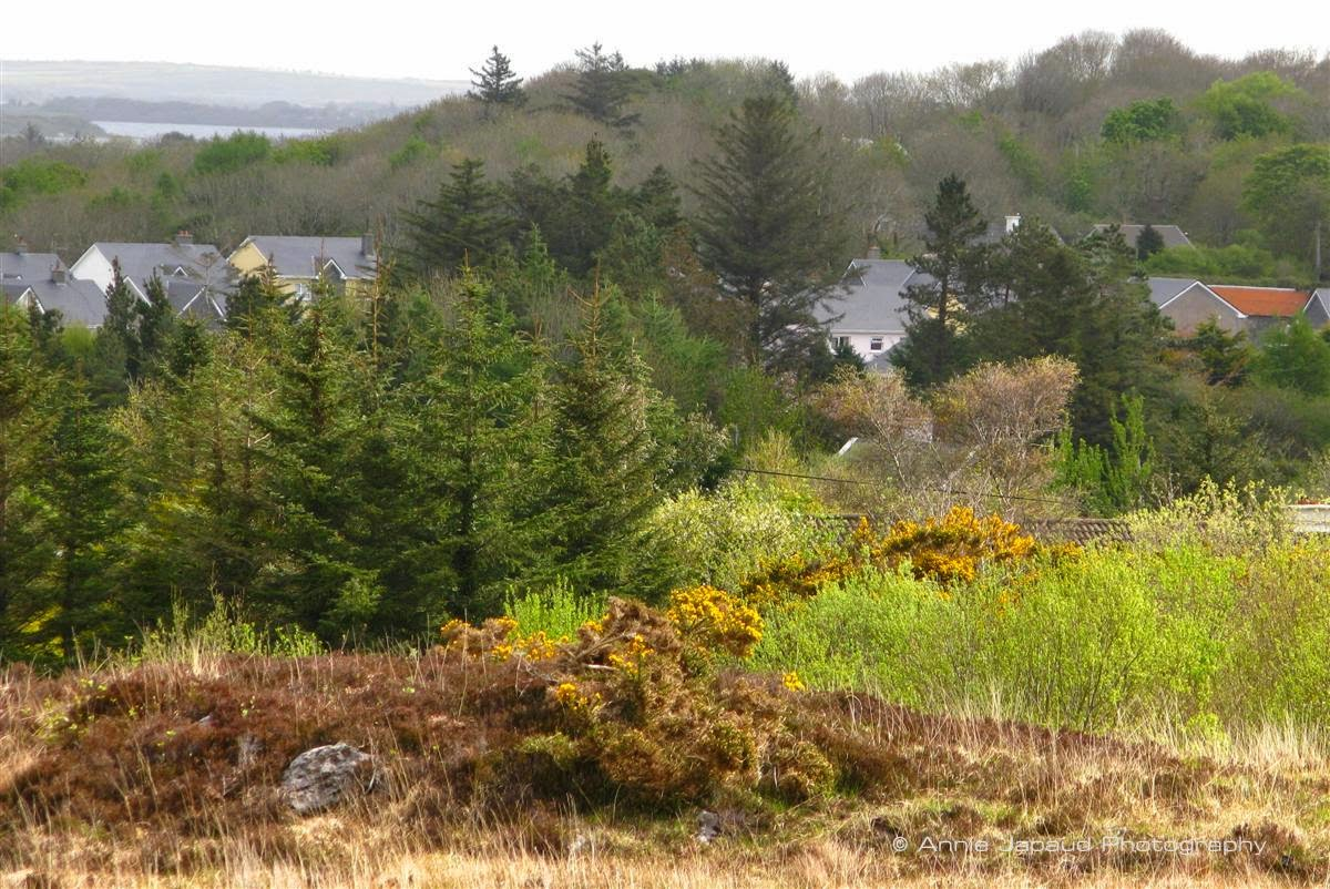 spring view from Oughterard