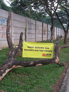 Pemindahan pohon besar