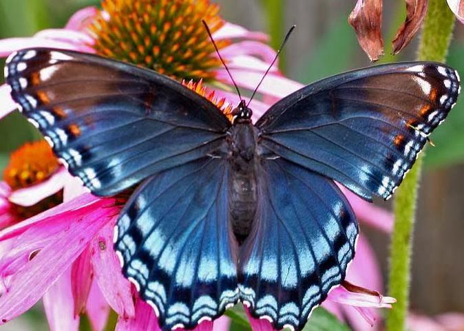 cerita anak kupu kupu sombong