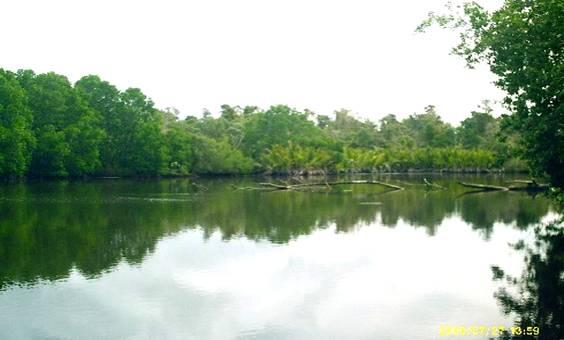 Hutan Mangrove adalah hutan yang tumbuh pada daerah pasang surut mempunyai banyak fungsi