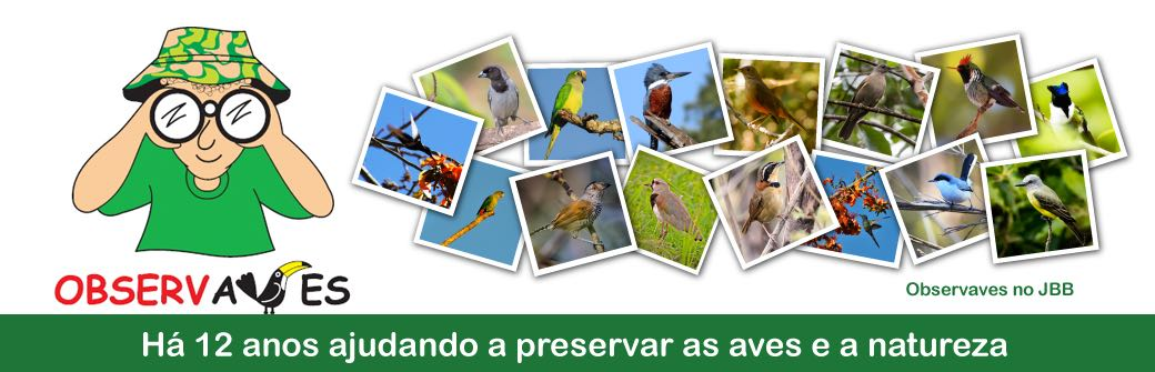 OBSERVAVES - Observadores de Aves do Planalto Central