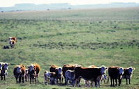 Comer carne estimula o desmatamento?