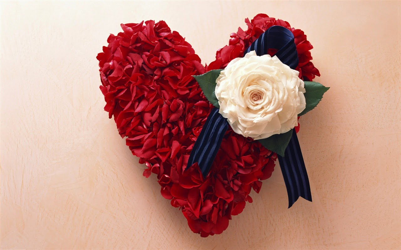 Red Rose Valentine S Day Special Gift World Celebrity Reality