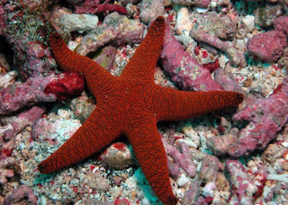 How To Draw A Starfish Draw Central