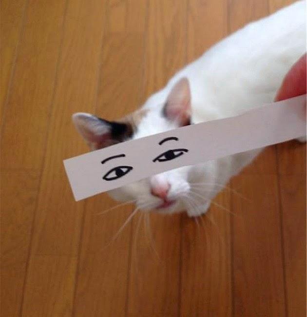 cartoon cat eyes