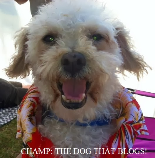 Champ: the Dog that Blogs