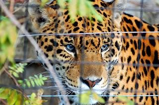 ملف كامل عن اجمل واروع الصور للحيوانات  المفترسة   حيوانات الغابة  1978107022_a09a696bcc