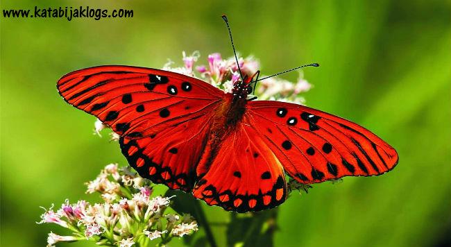 belajar bijak dari kupu-kupu