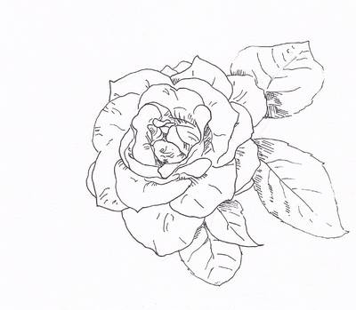 The art draw a rose with fiber tip pen outline the leaves add veins and a little hatching and youre done note that this is a very linear style of drawing its very crisp and hard ccuart Images