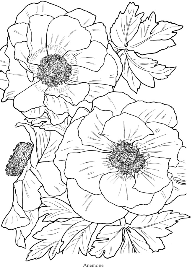 This is a photo of Tactueux Printable Coloring Pages for Adults Flowers