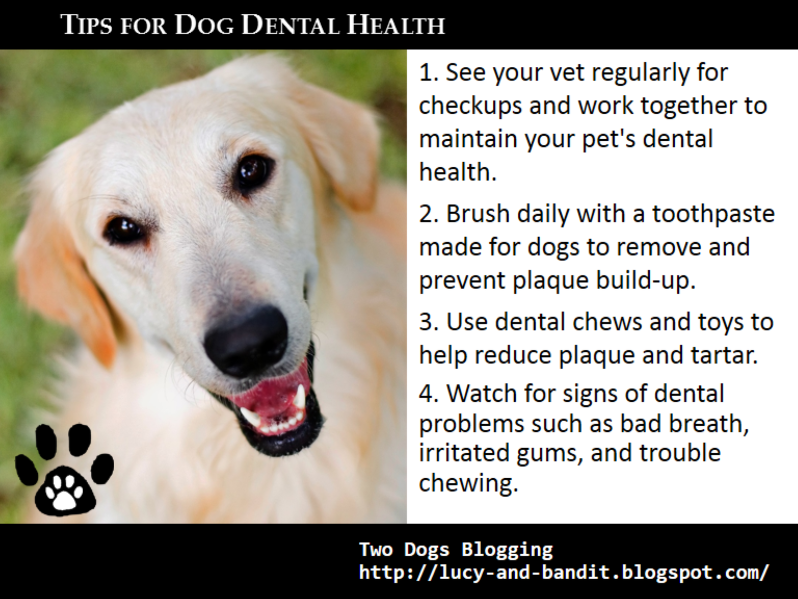 the importance of dental care in animals Good dental hygiene is instrumental in the overall health and quality of life in our cats and dogs periodontal disease is considered a leading health concern in companion animals with the.