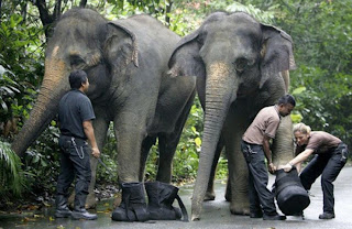 Funny Elephant Shoes