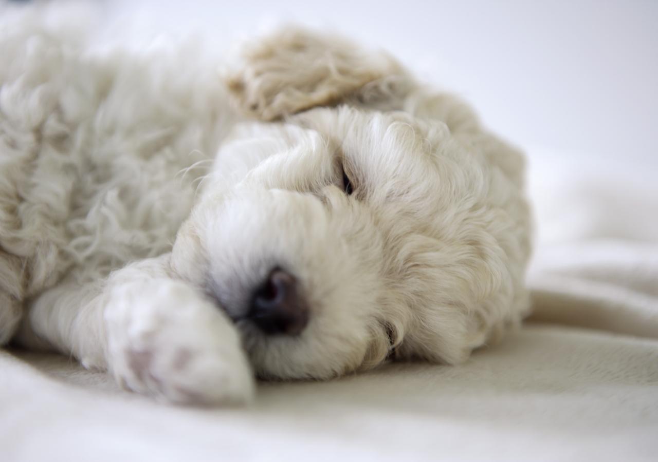 Fondo de pantalla de perros imagui for Fondos de pantalla de perritos