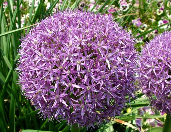 gardens@duke: Inspiration and ideas for your garden