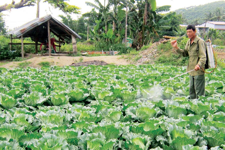 Gia Lai: Tự trồng rau sạch