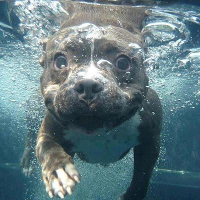 Foto de un perro debajo del agua
