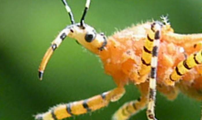 7 Spesies Serangga Paling Seram di Dunia