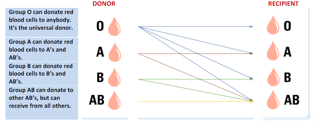 how to find out my blood type red cross