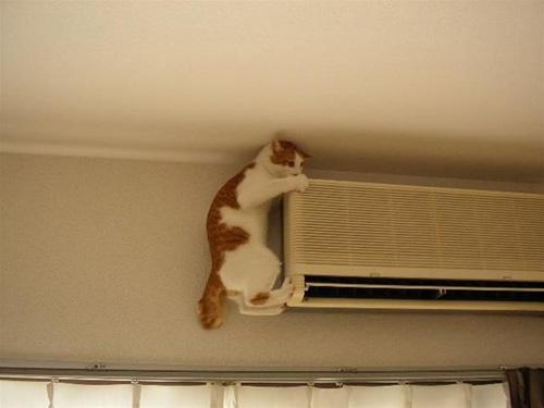 Las fotos más divertidas de gatos pequeños