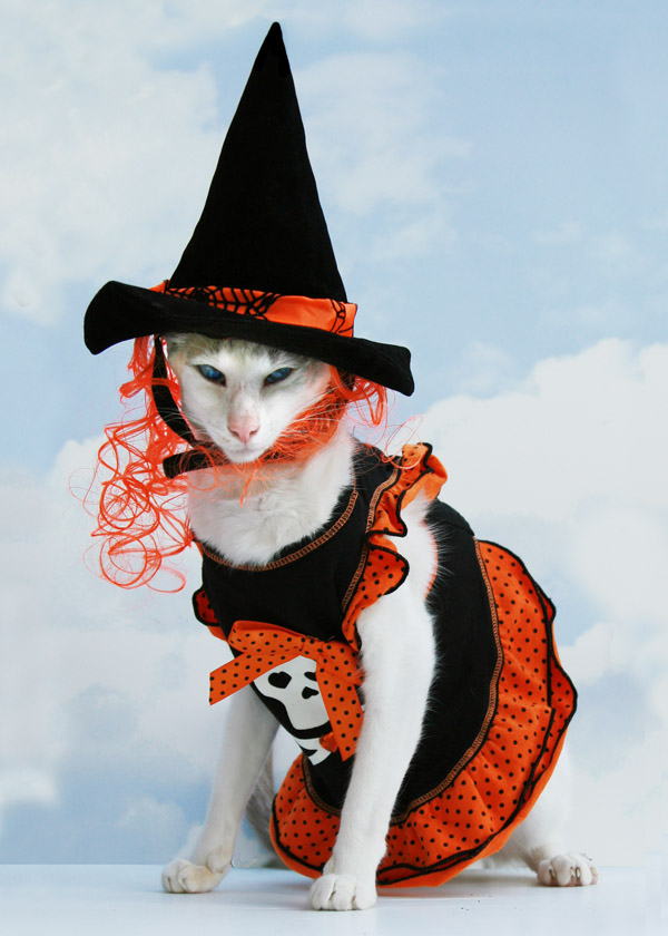 Funny Image Collection: Download Very Creative and Funny Cat Halloween Images!