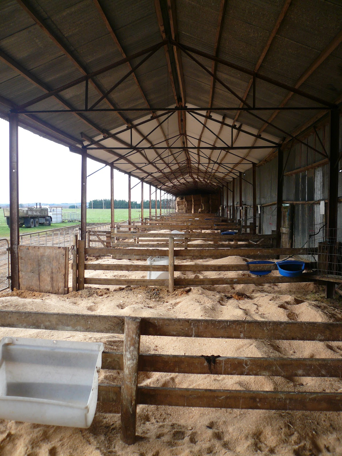 How To Move A Shed >> BEL Group Dairy Farms Internship - New Zealand 2012: The calves are coming...THE CALVES ARE ...